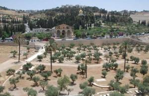 Monte das Oliveiras - Israel